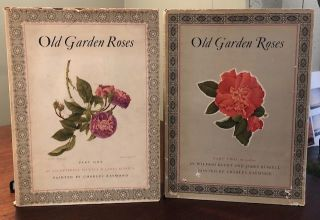 OLD GARDEN ROSES. (Two Voumes). Sacheverell Sitwell, James Russel